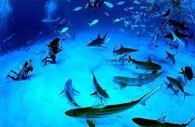 Багамские острова Нассау